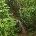 path to casita through the forest