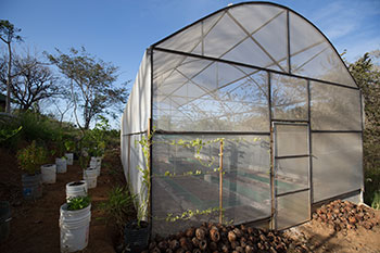 pachamama greenhouse grow own food ecology garden