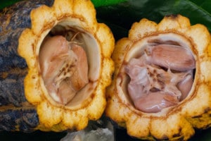cacao-after-cleanse-detox-pachamama-costa-rica-nutrition