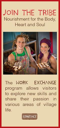 Work Exchange-Wild Treats-Juice & Dessert Bar-PachaMama-Costa Rica